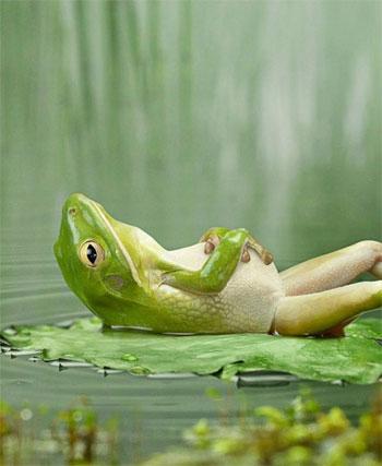 relaxing-frog